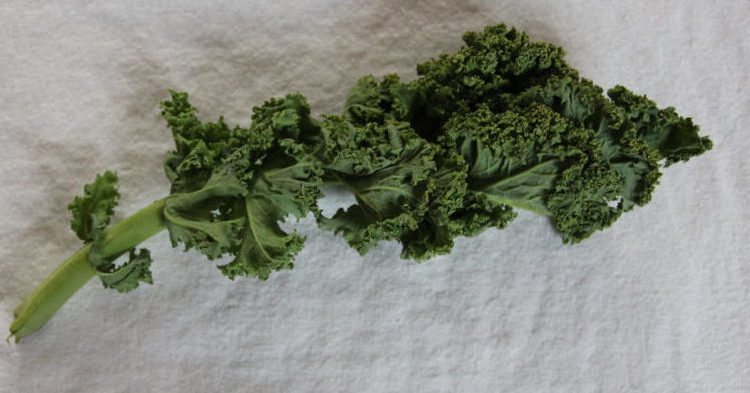 Das ist ein Stengel Grünkohl, der ein paar tage zu lange schon ungenutzt im Kühlschrank herumliegt.