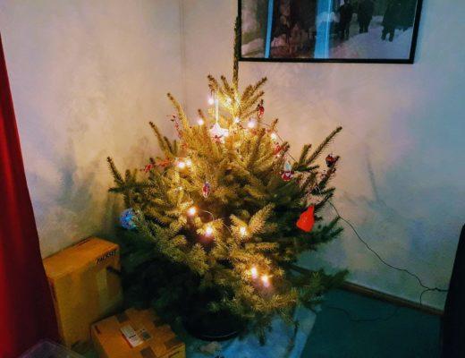 Ist der Weihnachtsbaum ökologisch? Nächste Frage bitte!