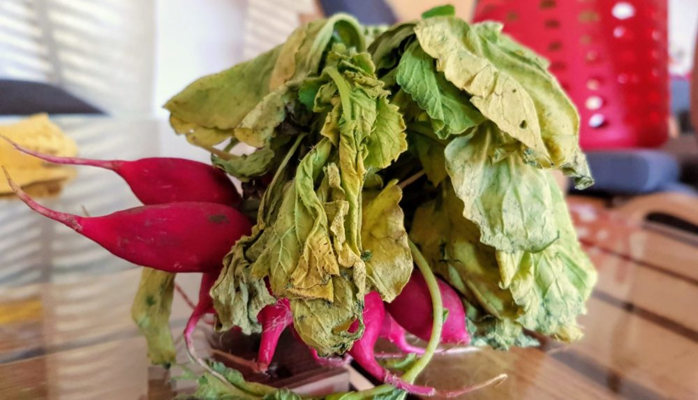 Leaf to Root? Diese Blätter schmecken noch, obwohl sie schon welk sind.